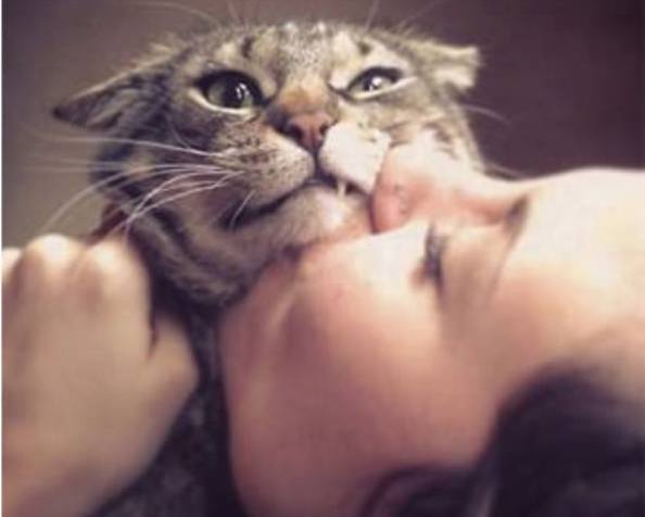 What Really is a Therapy Animal? My Guest Answers The Question. I Have Emotional Therapy Cats. Mental HealthAwareness.